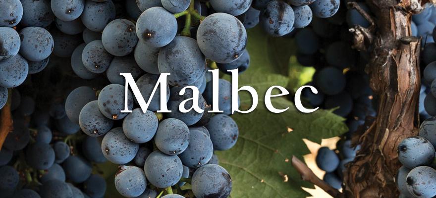 Us Grapes Malbec Cot At Fps