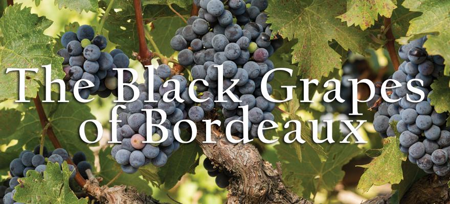 US Grapes - Black Grapes of Bordeaux