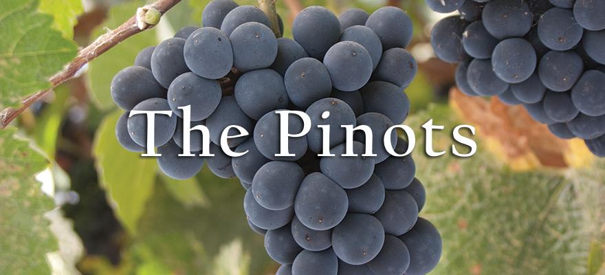 US Grapes - The Pinots