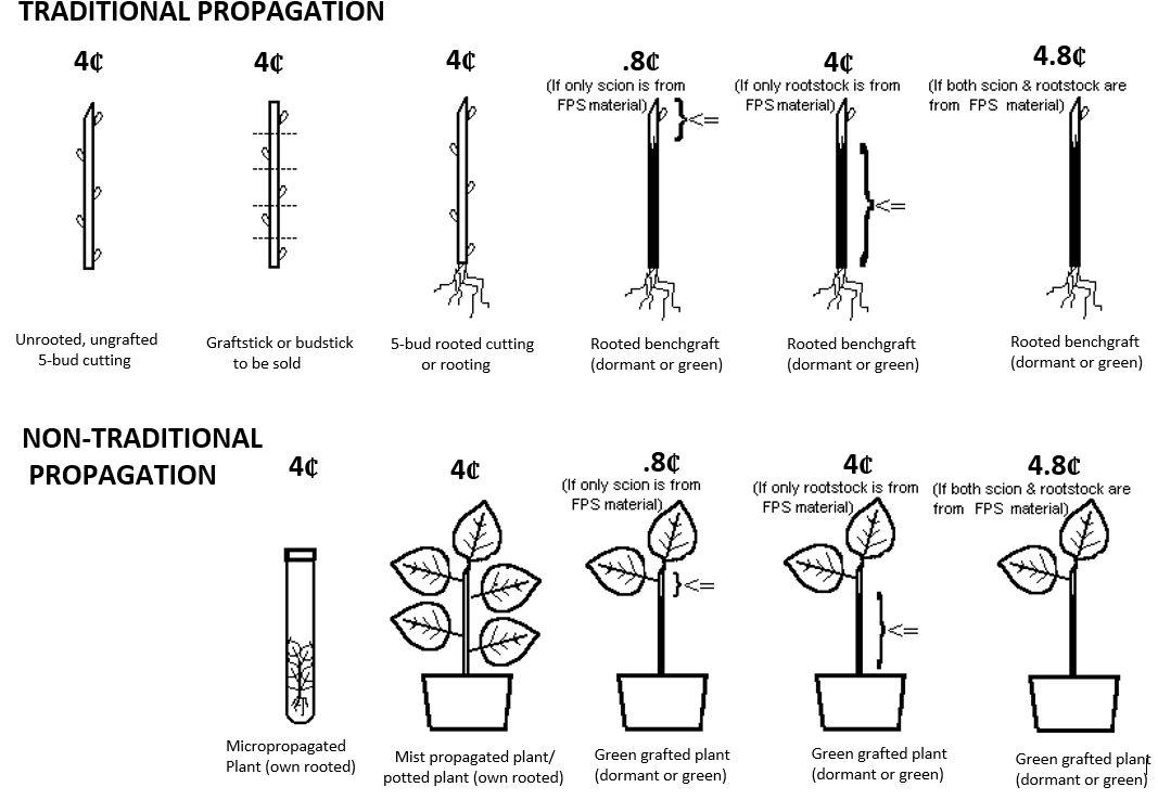Foundation Plant Services