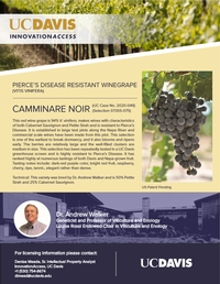 Pierce's Disease Resistant Grapevine Cultivars Released